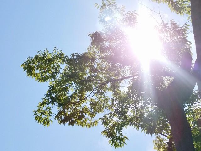 sunshine (640x480)